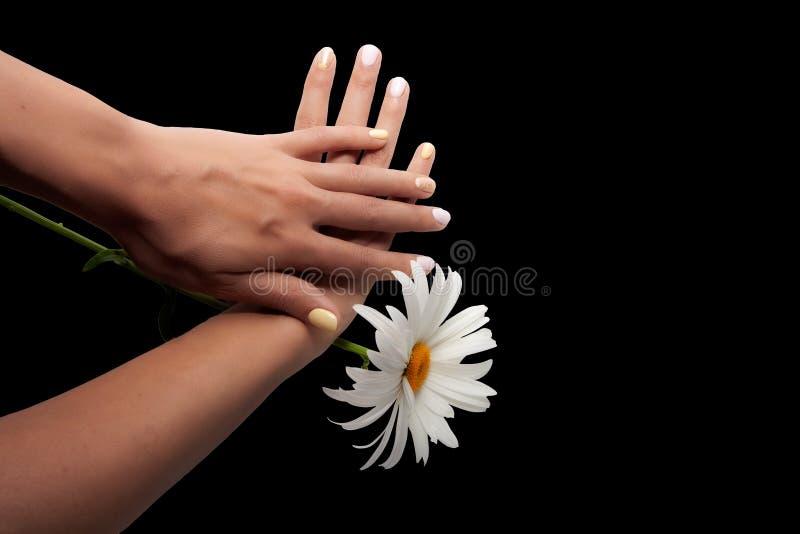 Mãos com rosa profissional da mulher e o tratamento de mãos amarelo dos pregos isolados no fundo preto foto de stock