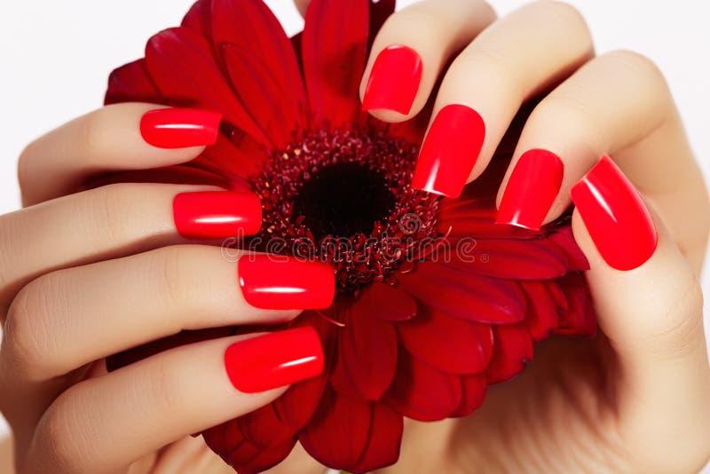 Mãos da beleza com tratamento de mãos vermelho da forma e a flor brilhante Polimento manicured bonito do vermelho em pregos imagem de stock royalty free