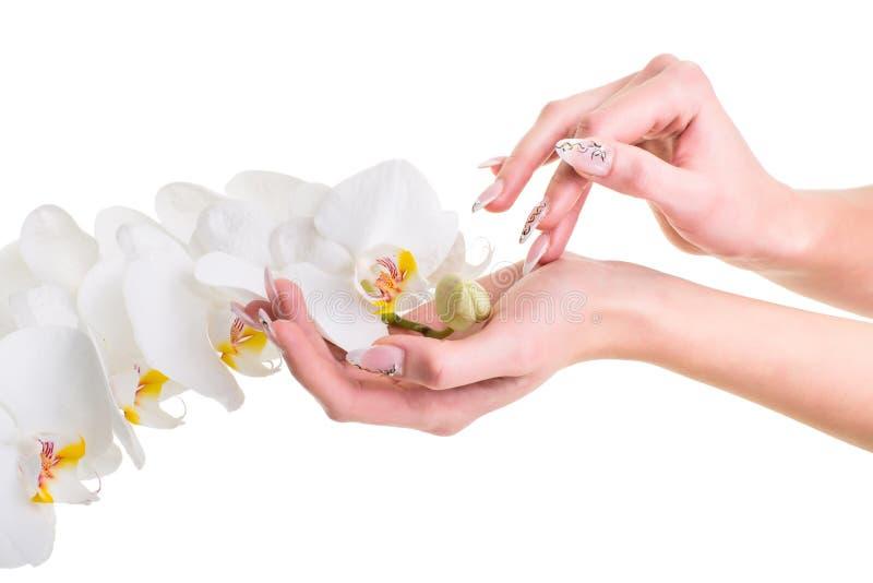 Mãos da menina que guardara uma orquídea no branco isolado fotografia de stock