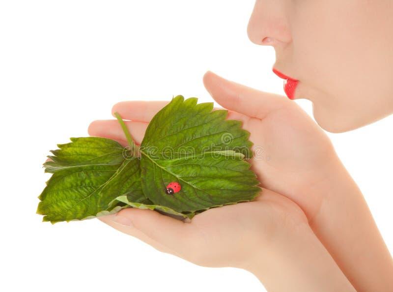 Mãos da mulher com folhas e pássaro da senhora do brinquedo imagem de stock