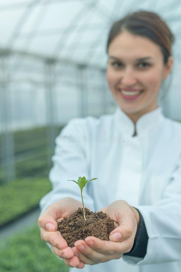 Mãos da mulher que guardam a planta verde no solo Conceito novo da vida imagem de stock royalty free