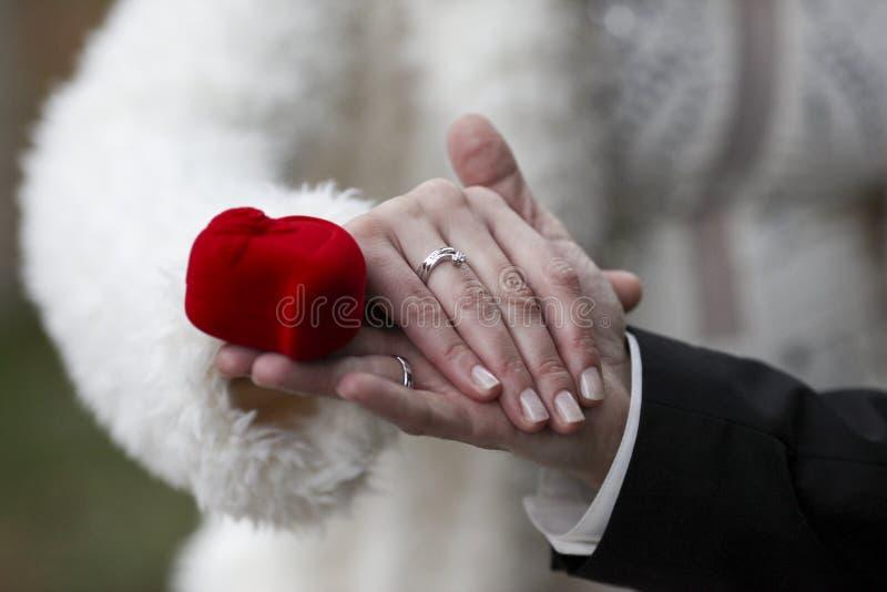 Mãos da terra arrendada com anéis de casamento foto de stock