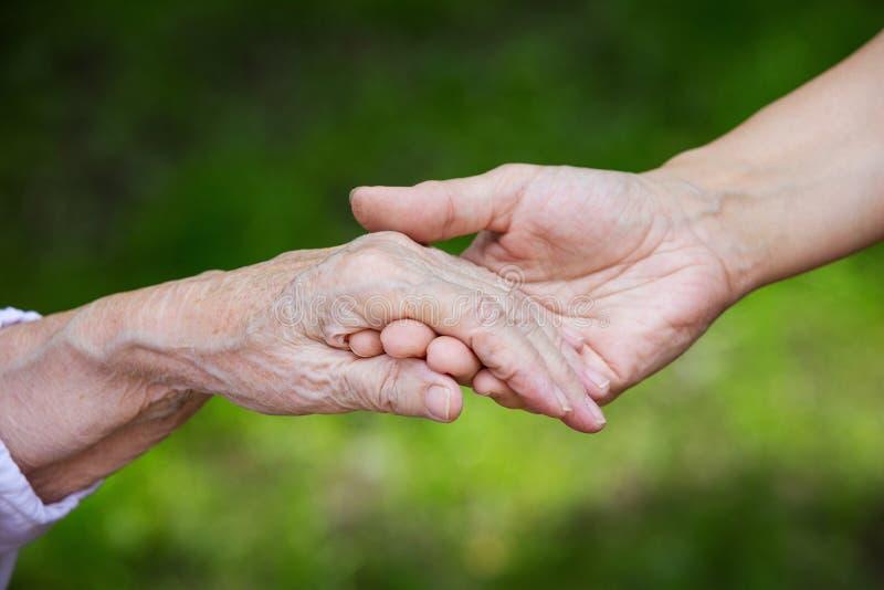 Mãos de mulheres adultas e superiores novas sobre o fundo verde fotografia de stock