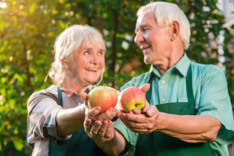 Mãos de pares superiores, maçãs imagens de stock