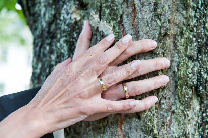 Mãos de um casal fresco com alianças de casamento no tronco de árvore imagem de stock