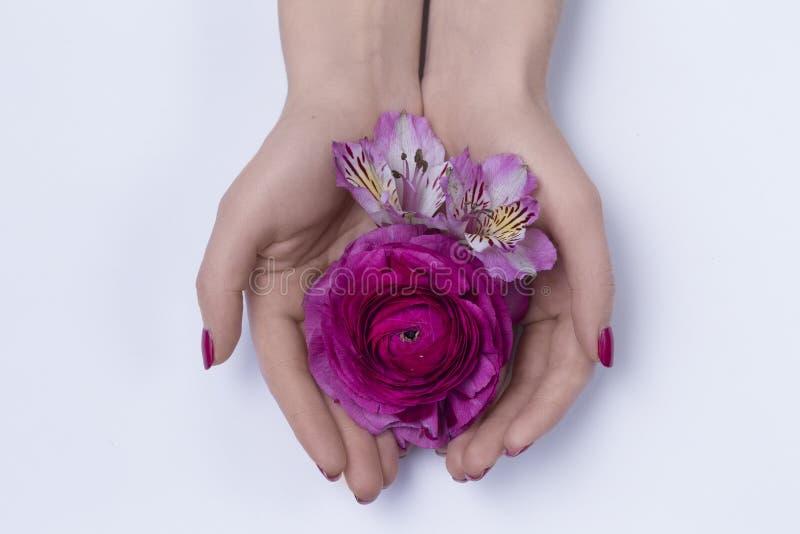 Mãos de uma mulher com flores fotos de stock royalty free