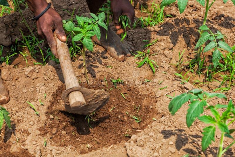 Mãos do fazendeiro rural africano com cultivo da ferramenta, arando a terra foto de stock royalty free