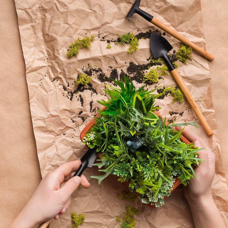 Mãos do jardineiro que plantam a flor no potenciômetro no papel do ofício foto de stock royalty free