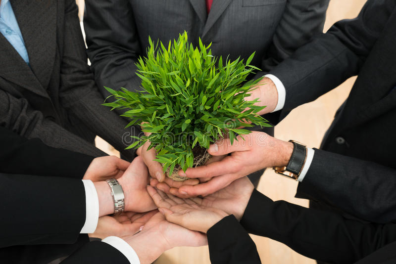 Mãos dos empresários que guardam a planta foto de stock