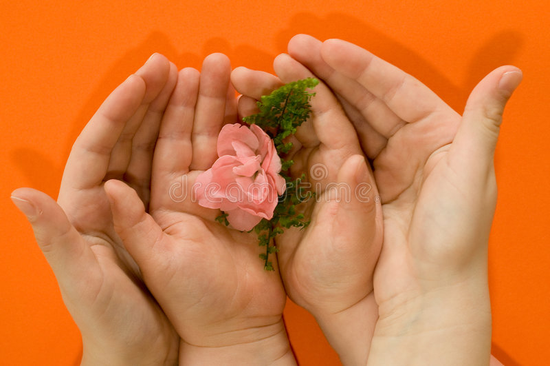 Mãos dos miúdos que protegem a flor imagens de stock