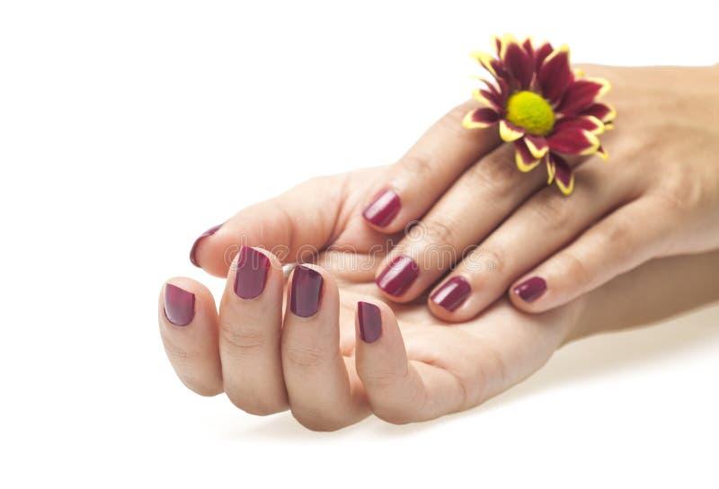 Mãos e flor fêmeas no fundo branco imagens de stock royalty free