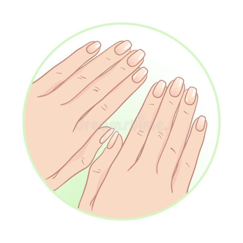 Mãos e tratamento de mãos fêmeas bonitos Ilustração do vetor do cuidado do corpo ilustração do vetor