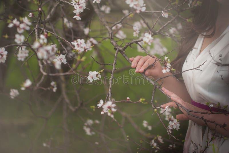 Mãos fêmeas bonitas e árvores de florescência fotos de stock