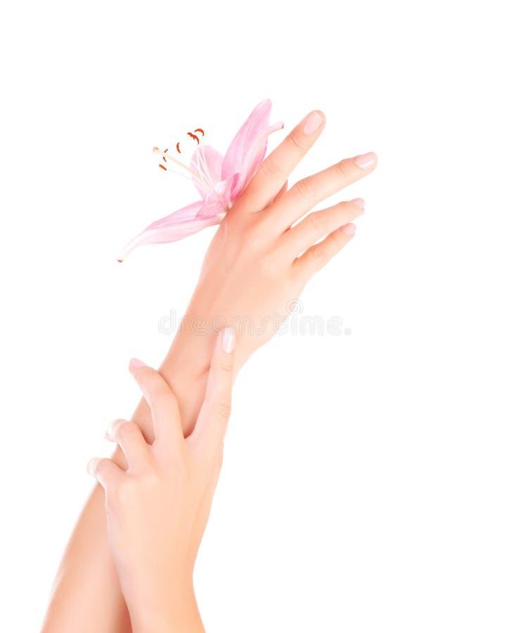 Mãos fêmeas com lírio cor-de-rosa fotos de stock