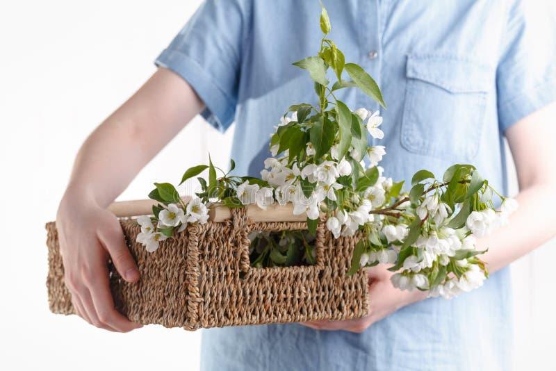 Mãos fêmeas da ternura com flores da mola Conceito da ternura, cuidados com a pele, as mãos das flores da mola da posse da menina fotografia de stock royalty free