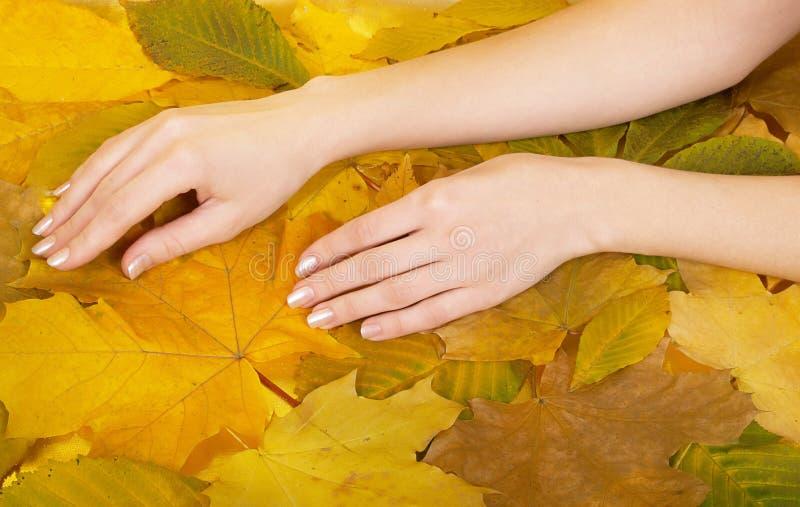 Mãos fêmeas de encontro às folhas foto de stock