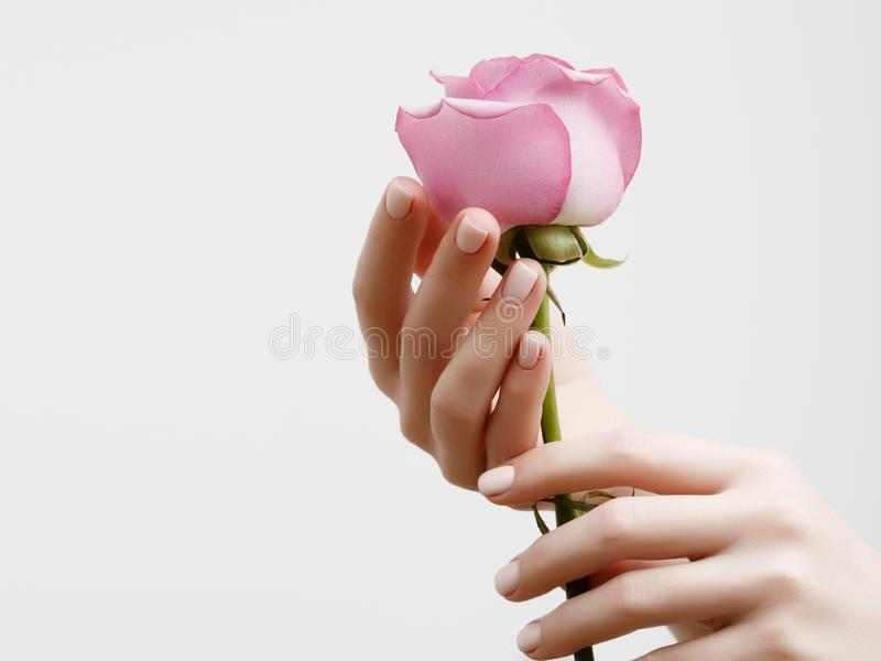 Mãos fêmeas elegantes com tratamento de mãos cor-de-rosa nos pregos Dedos bonitos que guardam uma rosa fotos de stock royalty free