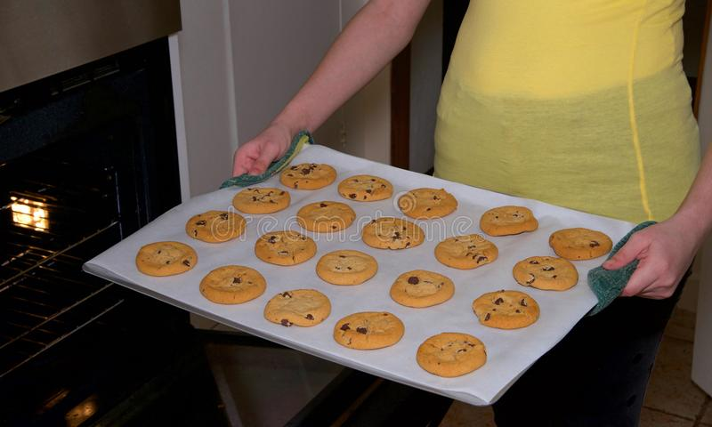 Mãos fêmeas que guardam a folha de cookies frescas dos pedaços de chocolate do forno imagens de stock royalty free