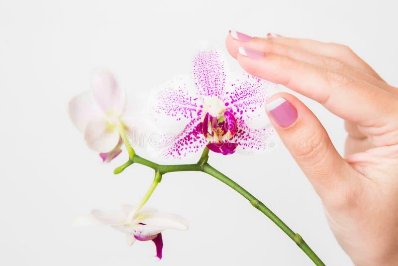 Mãos fêmeas que guardam o ramo da orquídea bonita imagens de stock