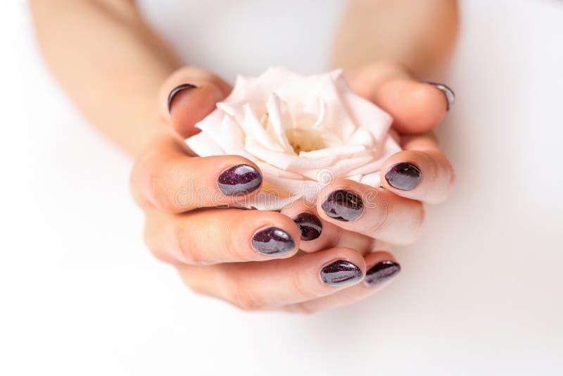Mãos fêmeas que guardam a rosa do rosa no fundo branco e pregos roxos no dedo fotografia de stock