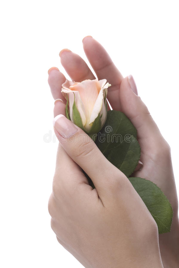 mãos fêmeas well-groomed fotos de stock