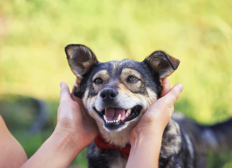 Mãos humanas a acariciar atrás das orelhas um cão marrom um pouco sorridente numa borboleta vermelha inteligente num jardim de Ve imagem de stock royalty free