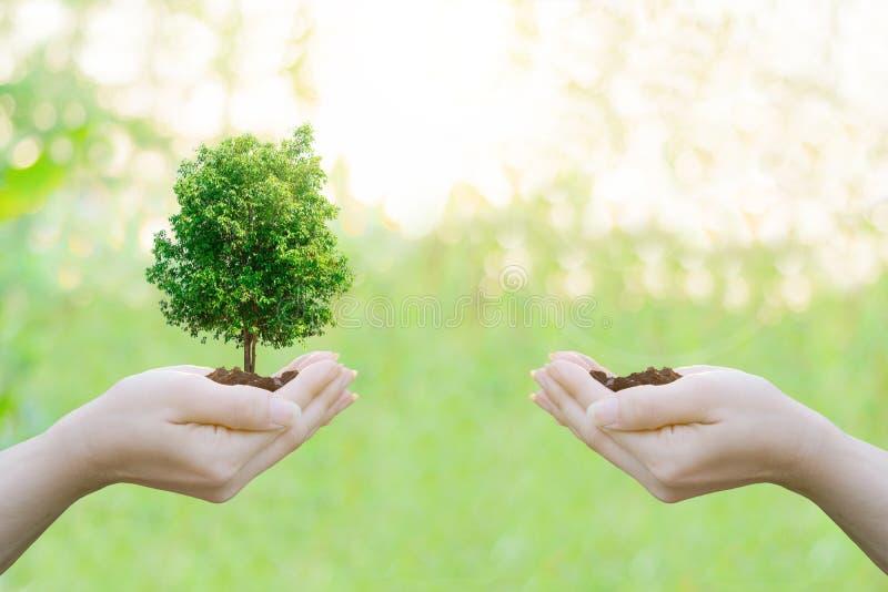 Mãos humanas do conceito da ecologia da exposição dobro que guardam a árvore grande da planta fotografia de stock royalty free