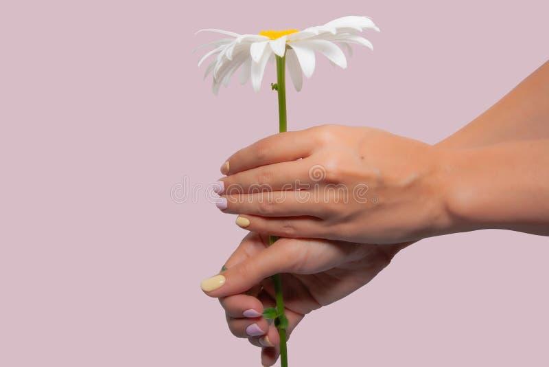 mãos isoladas da mulher com rosa e tratamento de mãos amarelo nos pregos fotos de stock