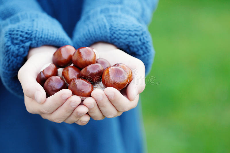 Mãos pequenas com castanhas fotografia de stock royalty free