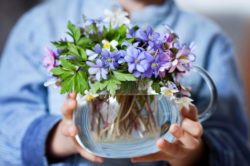 Mãos pequenas, guardando o vaso de vidro com o bouqu da flor da mola da floresta fotografia de stock
