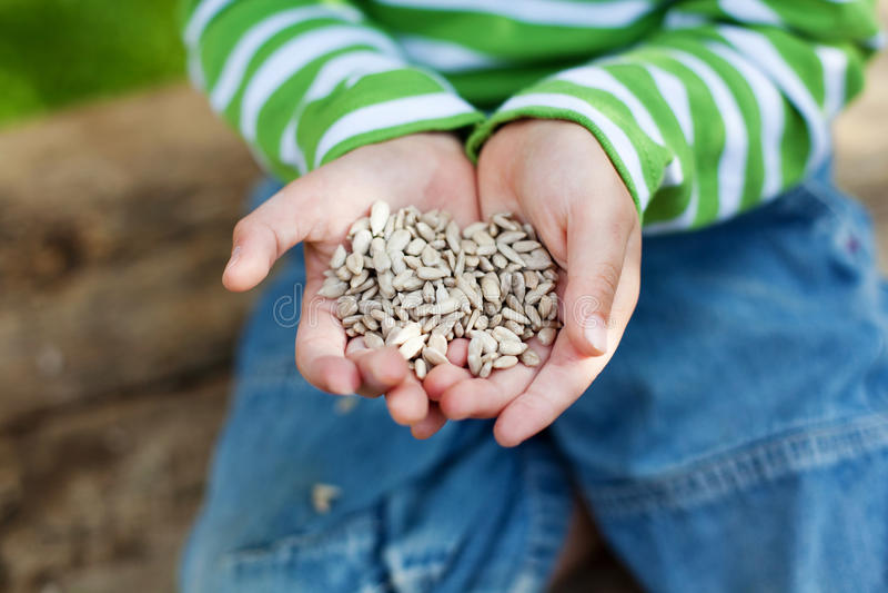 Mãos pequenas que guardaram sementes de girassol imagens de stock