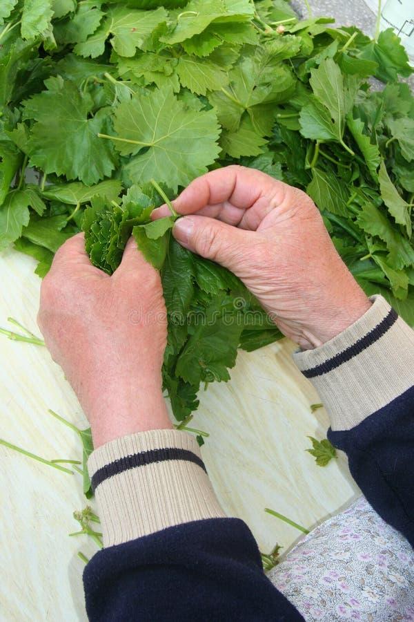 Mãos que aranging as folhas da uva fotos de stock royalty free