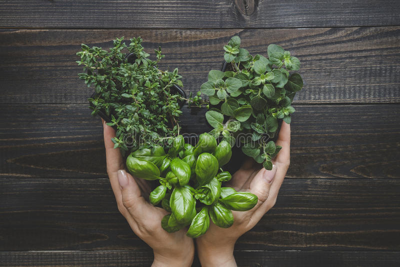 Mãos que guardam ervas frescas na forma na tabela de madeira escura, vista superior do coração fotos de stock royalty free