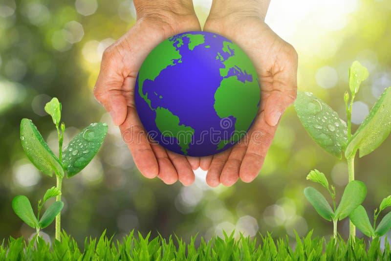 Mãos que guardam o globo no fundo verde borrado do bokeh com brotos crescentes e grama verde fotografia de stock
