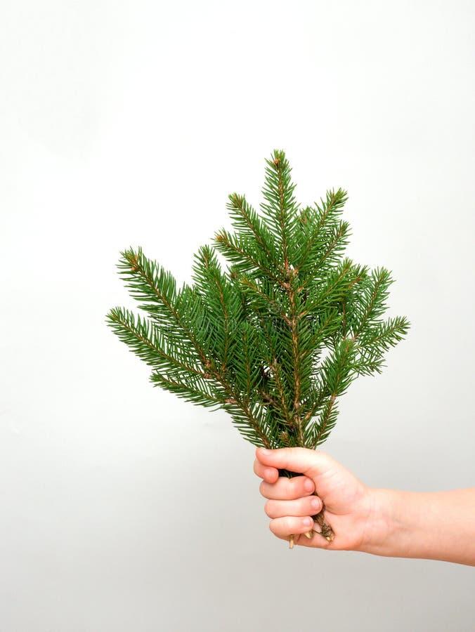 Mãos que guardam o grupo de ramos de árvore do abeto no fundo cinzento ao fazer decorações do Natal, espaço da cópia fotos de stock