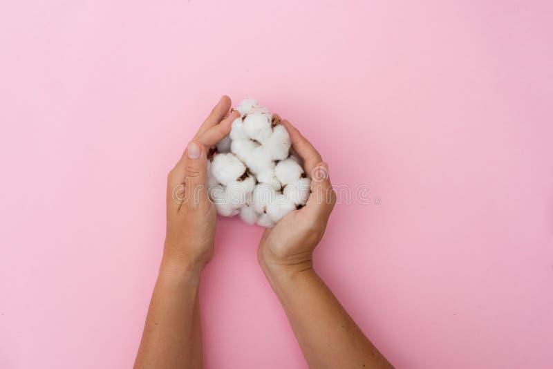 Mãos que guardam os botões do algodão cru fotos de stock