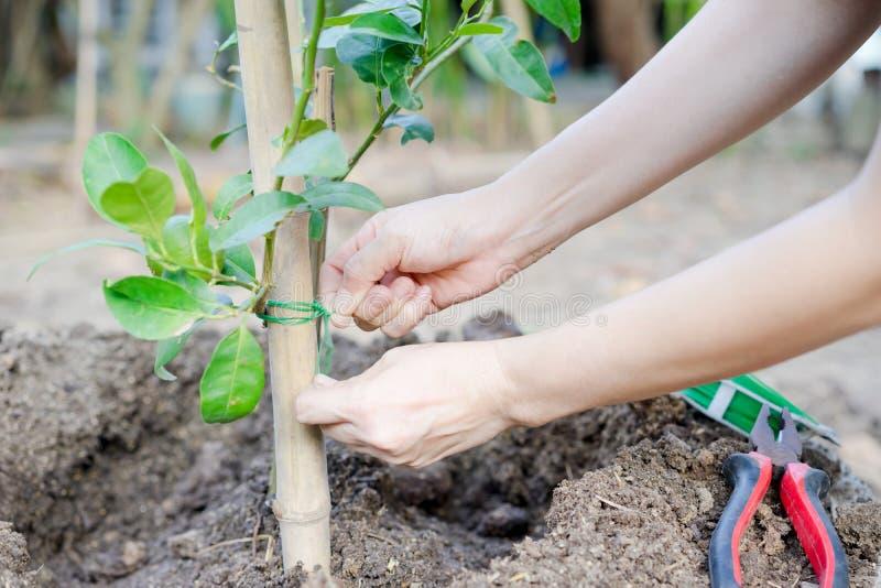 Mãos que plantam uma árvore fotos de stock royalty free