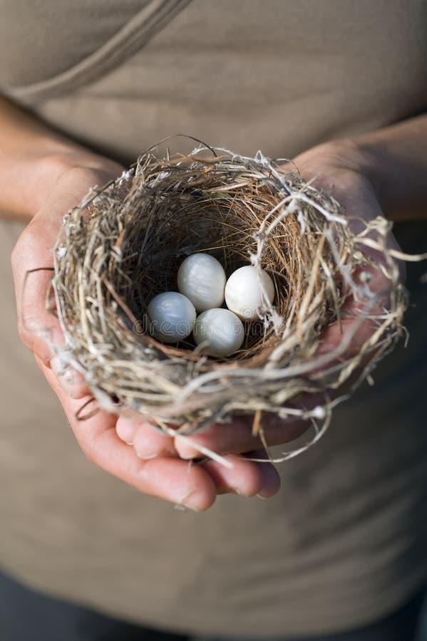 Mãos que prendem o ninho com ovos fotografia de stock