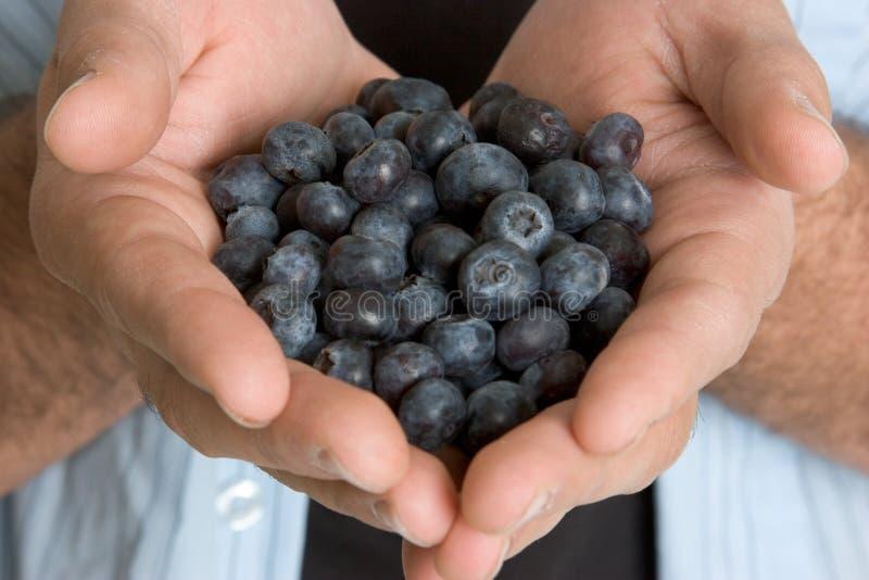 Mãos que prendem uvas-do-monte foto de stock