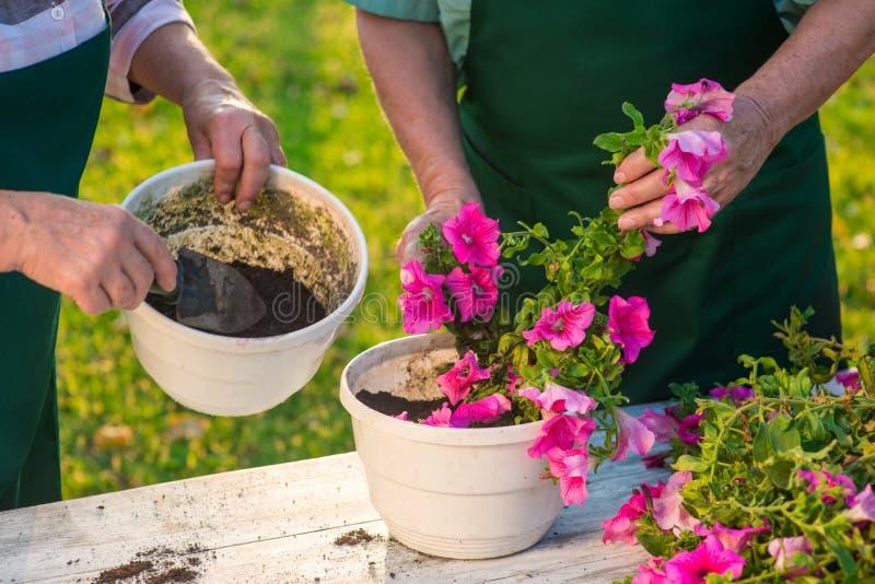 Mãos superiores que trabalham com flores imagem de stock royalty free