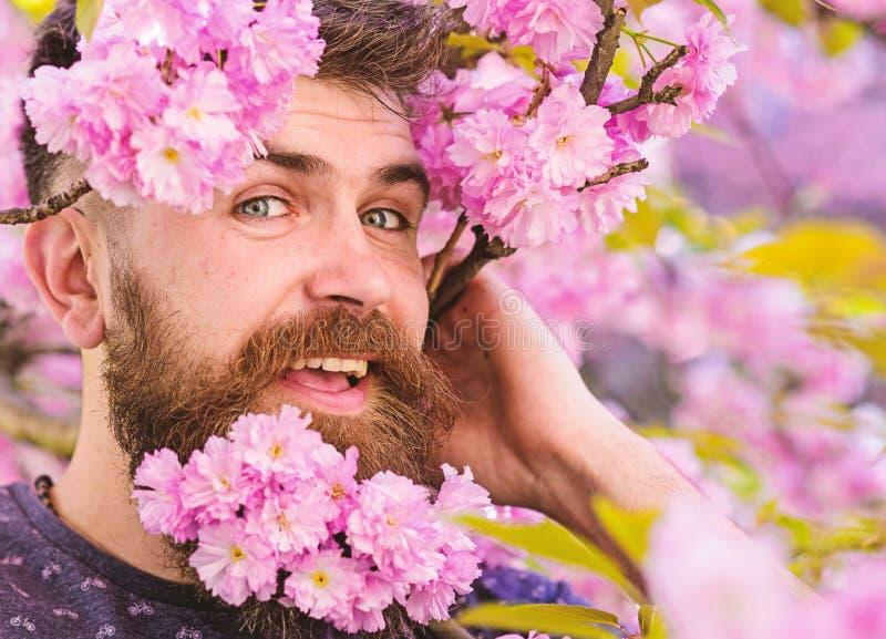 Mężczyzna z brodą blisko i wąsy na szczęśliwych twarzy oferty menchii kwiatach, zamykamy up Modniś z Sakura okwitnięciem w brodzi obraz stock