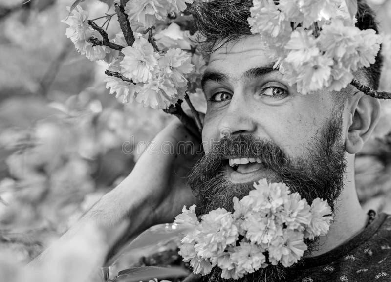 Mężczyzna z brodą blisko i wąsy na szczęśliwych twarzy oferty menchii kwiatach, zamykamy up Modniś z Sakura okwitnięciem w brodzi zdjęcie royalty free