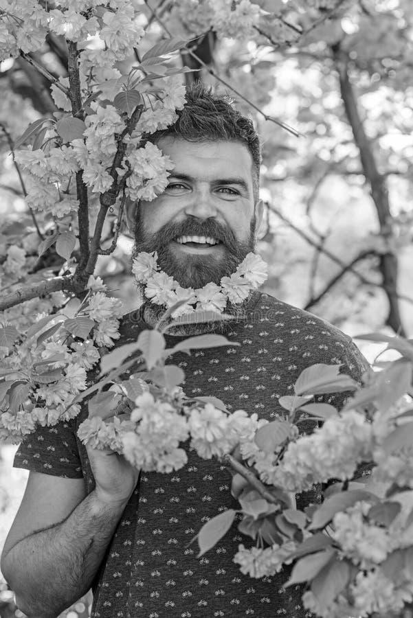 Mężczyzna z brodą i wąsy na szczęśliwych twarzy blisko menchiach kwitnie Kwitnący pojęcie Modniś cieszy się wiosnę z Sakura okwit zdjęcie royalty free