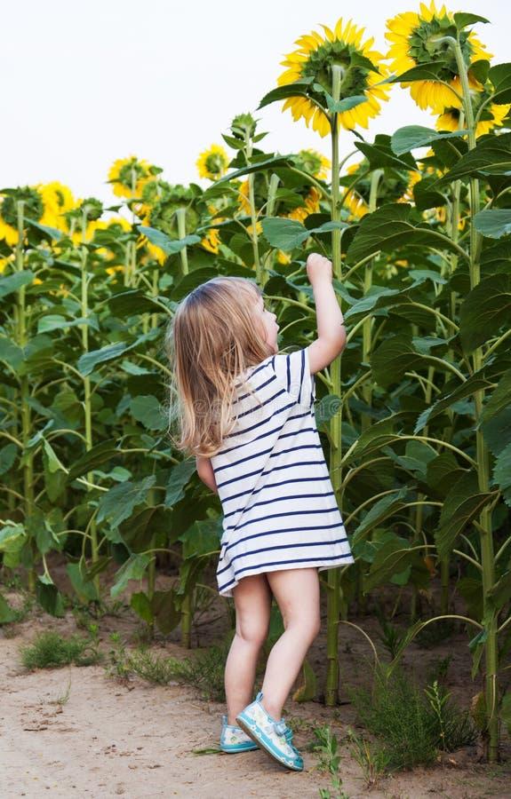 Mädchen auf dem Feld von Sonnenblumen lizenzfreie stockbilder
