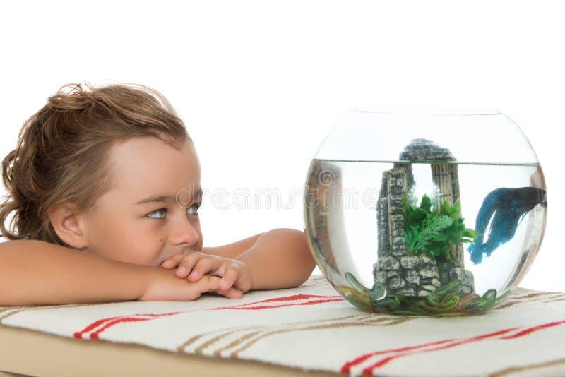 Mädchen, das ein Aquarium mit Fischen betrachtet stockfotos