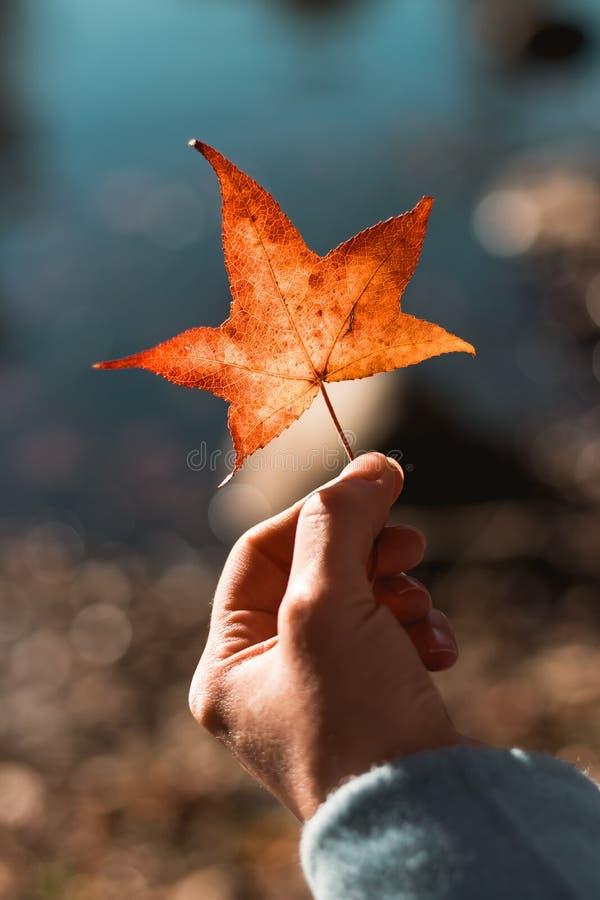 Mädchen, das ein orange Blatt im Herbst hält lizenzfreies stockfoto