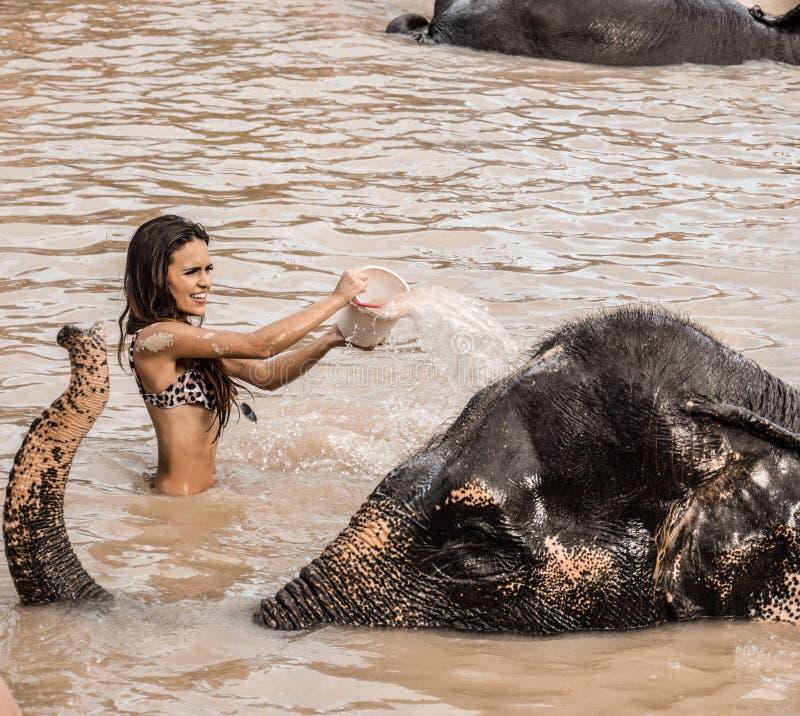 Mädchen, das einen Elefanten wäscht stockfotografie