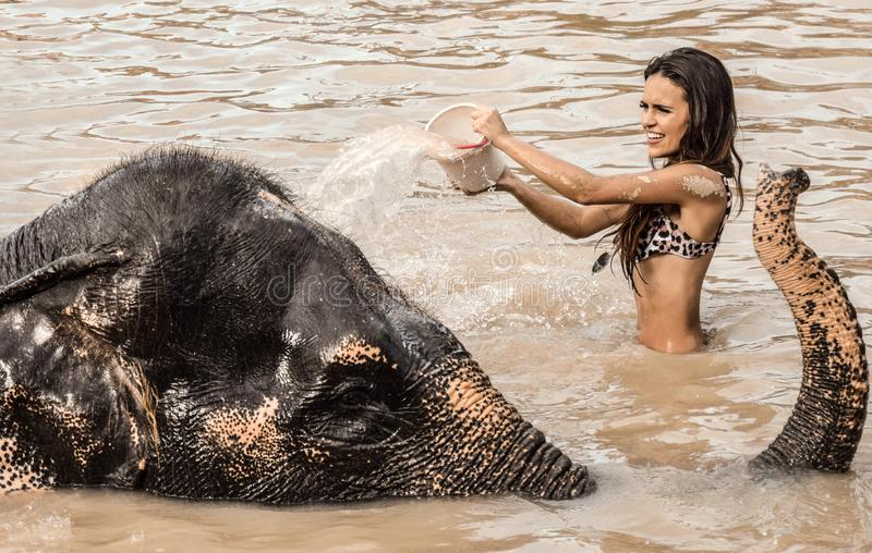 Mädchen, das einen Elefanten wäscht lizenzfreie stockfotografie