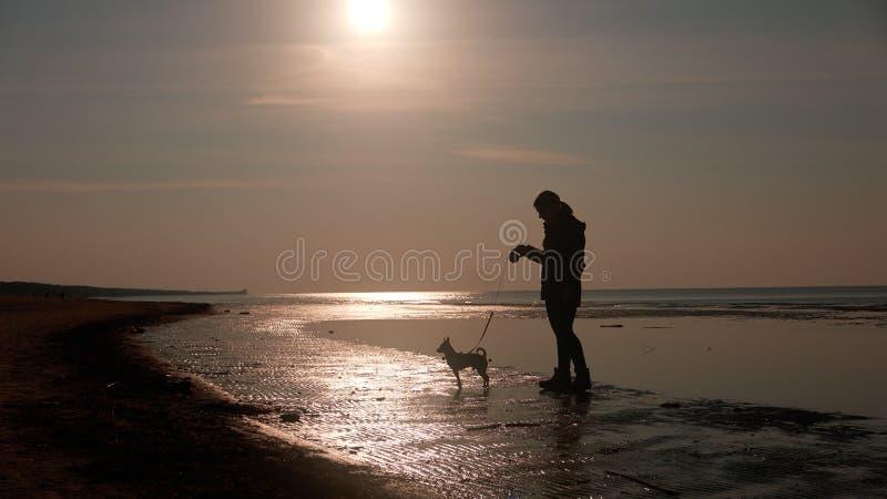 Mädchen, das mit Hund auf Strand spielt stockfotografie