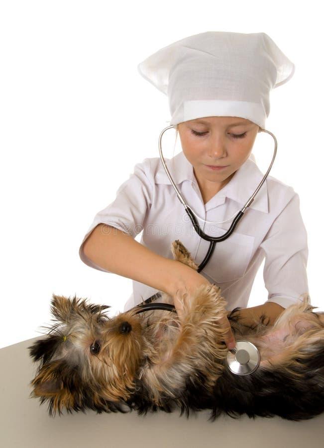 Mädchen, das Tierarzt spielt lizenzfreie stockfotografie